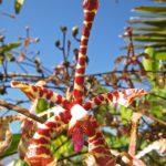 Ranomafana Park - Orchids