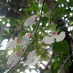 Parc de Ranomafana - Orchidées