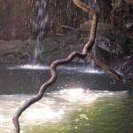 Parc Isalo - Lagune noire