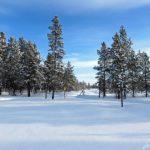 Les jolis paysages enneigés de Laponie avec des plaines couvertes de forêts de pins et des lacs gelés à perte de vue.