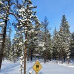 Au milieu d'une plaine couverte de pins, un panneau en forme de losange jaune attire le regard: « Attention aux loups »