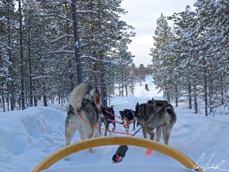 Les 6 chiens composés de chiens de même sexe (ou de femelle castrée avec des mâles) de notre attelage sont lancés sur les chemins enneigés
