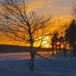 Tandis que le soleil rougeoyant descend sur l'horizon, les pins et les bouleaux deviennent peu à peu de simples ombres.