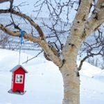 Une mangeoire à oiseau en forme de maisonnette rouge est suspendue à une branche de bouleau. L'occasion pour les oiseaux de trouver leur nourriture à tout moment.