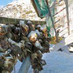 Le stockfisch, ce filet de poissons séchés à l'air libre ? En Norvège, le poisson séché (tørrfisk en norvégien) est une spécialité particulièrement dans le nord du pays.