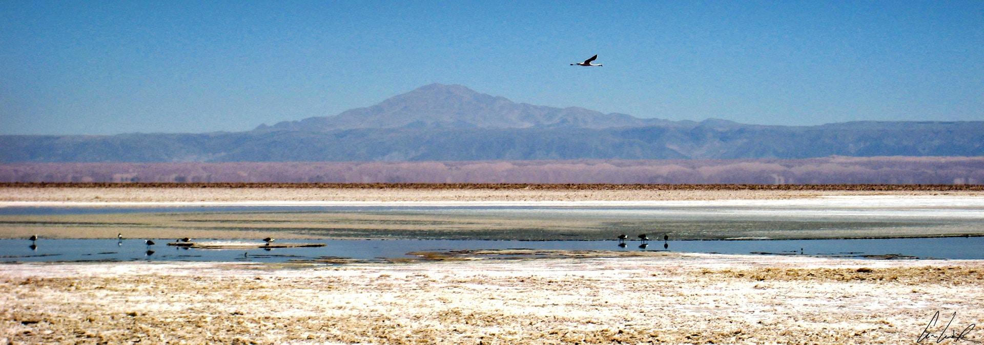 Le Salar de l'Atacama est émaillé de quelques points d'eau et ces lagunes offrent un kaléidoscope de couleurs étonnantes