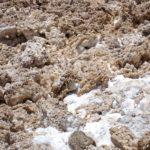 Le Salar de l'Atacama n'est ni ultra-lisse, ni ultra-blanc mais plutôt constitué de plein de cristaux et de concrétions de sel, de couleur grise