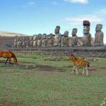 A l'approche du crépuscule, sur le site de l'Ahu Tongariki seuls quelques chevaux sauvages observent les 15 colosses de pierre tournant le dos à l'océan