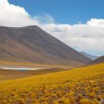 La lagune Miscanti surgit soudain au bout de la route : une grande étendue d'eau au milieu de l'altiplano chilien