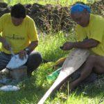 Durant les compétitions de gravures et sculptures du festival Tapati Rapa Nui, chaque candidat peut exprimer sa maitrise et son style particulier