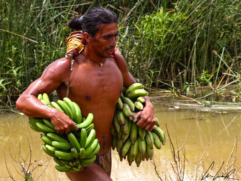 Au Festival Tapati, le triathlon Tau'a Rapa Nui comprend trois épreuves dont une course à pieds en portant un régime de bananes sous chaque bras