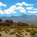 Altiplano chilien - Les contrastes sont saisissants, entre l'azur du ciel, les sommets enneigés et les teintes jaunes de la végétation