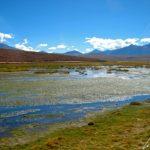 Altiplano chilien – Tout autour du village de Machuca se trouvent d'immenses « bofedals » où viennent paître lamas et alpagas