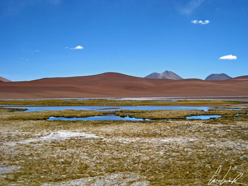 Altiplano chilien - Sur les hauts plateaux à plus de 4000 mètres, un belvédère fait face aux Vegas de Quepiaco: de petites lagunes avec des oiseaux