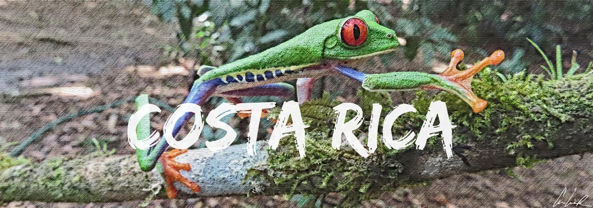 La Rainette aux yeux rouges est devenue la plus belle icône du Costa Rica à l'échelle internationale, symbolisant la biodiversité extraordinaire de ce petit pays.