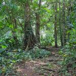 Des sentiers aménagés dans la forêt tropicale sont prévus pour découvrir la végétation luxuriante et un écosystème unique.