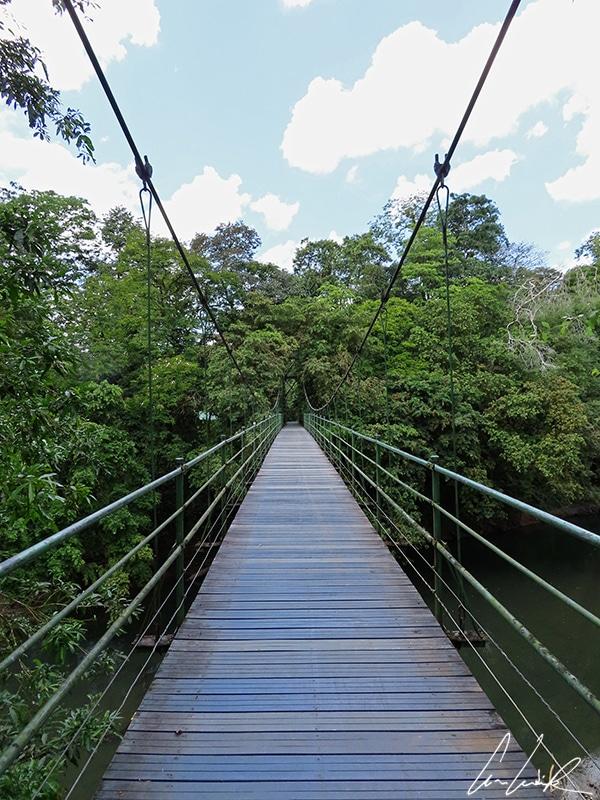 Dans les forêts tropicales costariciennes, de nombreux parcours intègrent des passerelles perchées à plusieurs dizaines de mètres au-dessus du sol.