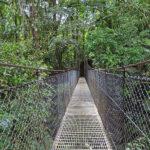 Au Costa Rica, des ponts suspendus pour la plupart en acier, sont intégrés à des sentiers et offrent des points de vue uniques sur la canopée.