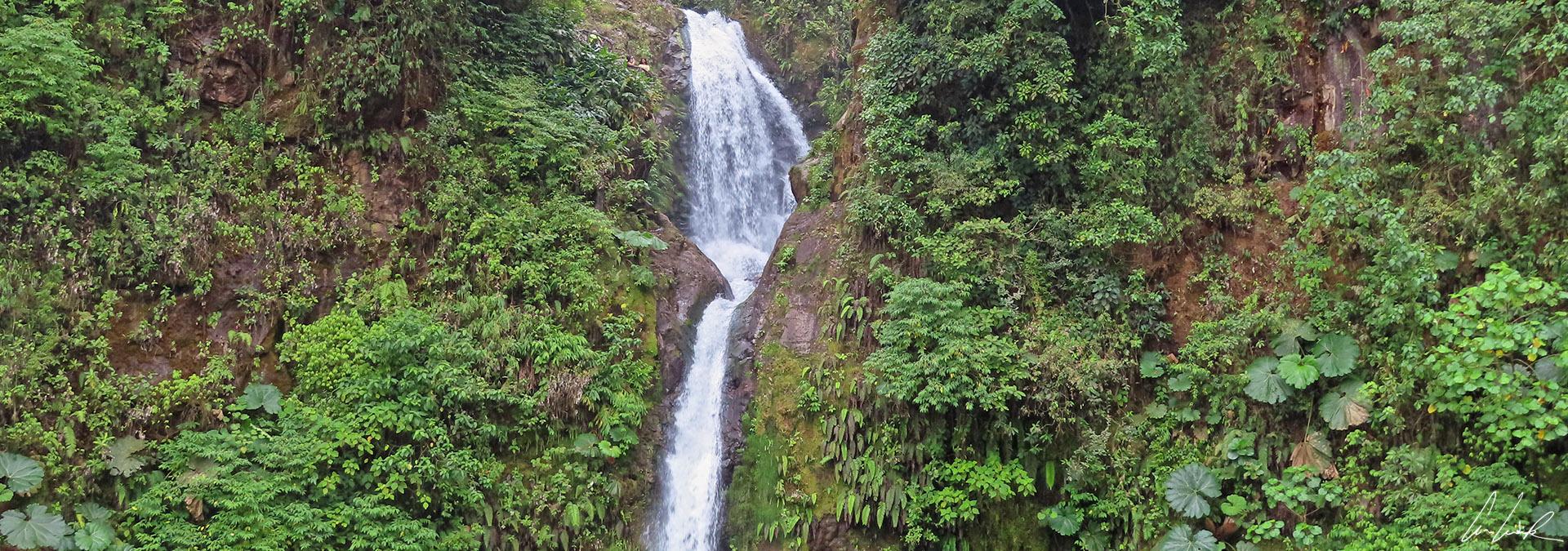 Voyage au cœur des forêts tropicales du Costa Rica