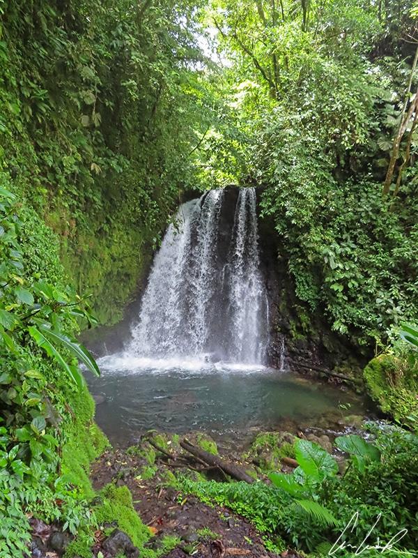 La cascade de Danta est une chute d'eau de six mètres de hauteur, entourée de spectaculaires fougères et palmiers. L'air y est frais.