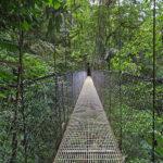 Un pont suspendu en acier, perché à plusieurs dizaines de mètres au-dessus du sol, offre des points de vue uniques sur la canopée.