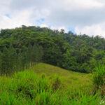 Au détour d'un chemin, on sort de la forêt tropicale pour déboucher sur un pré broussailleux, relativement plat, offrant un océan de verdure à perte de vue. Les vertes prairies et champs du Costa Rica abritent les meilleures races de bovins.
