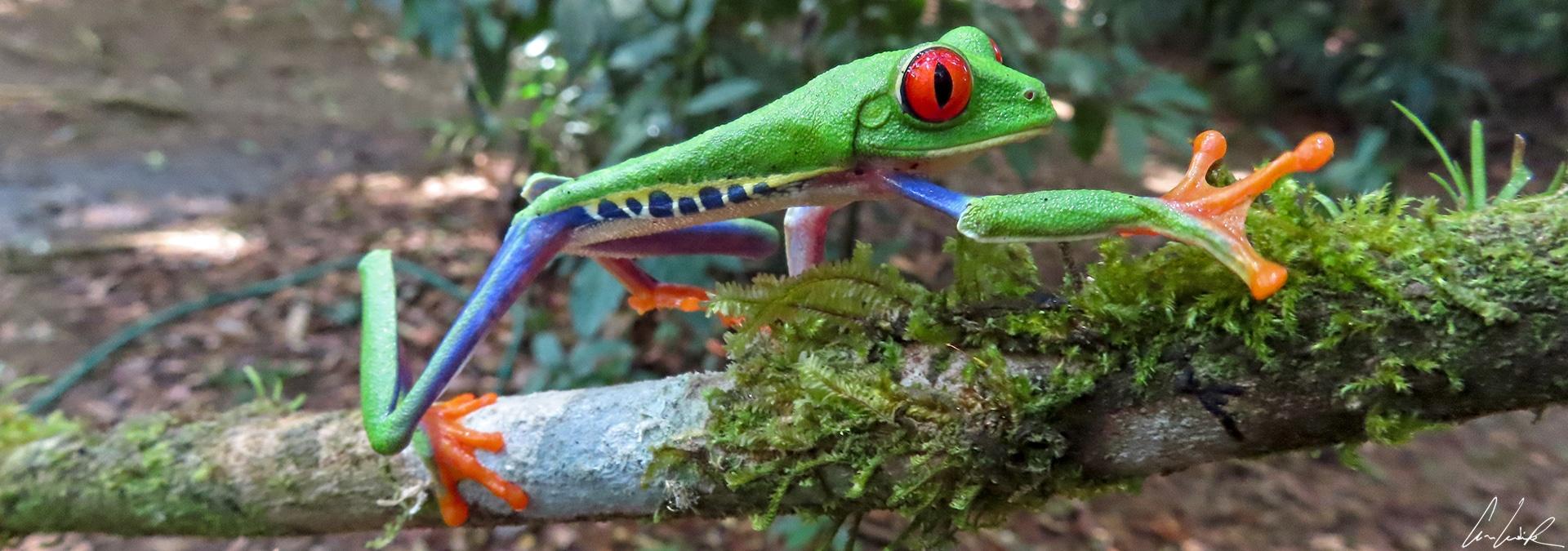Le Costa Rica: un grand réservoir de biodiversité