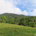 The sides of the Tenorio volcano are covered with dense vegetation. The trails allow you to explore this exuberant tropical vegetation.