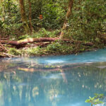 The green vegetation of the Tenorio volcano park reflects in the turquoise blue waters of the Rio Celeste.