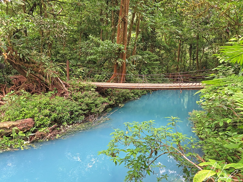 One last little wooden bridge crosses the turquoise blue water to reach the birthplace of the Rio Celeste, also called the Teñidero (« the dyers »).