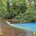 This is the birthplace of the Rio Celeste, also called the Teñidero. The Buenavista River and the Quebrada Agria, two rivers with pristine clear water, unite to create a turquoise-colored river: the Rio Celeste.