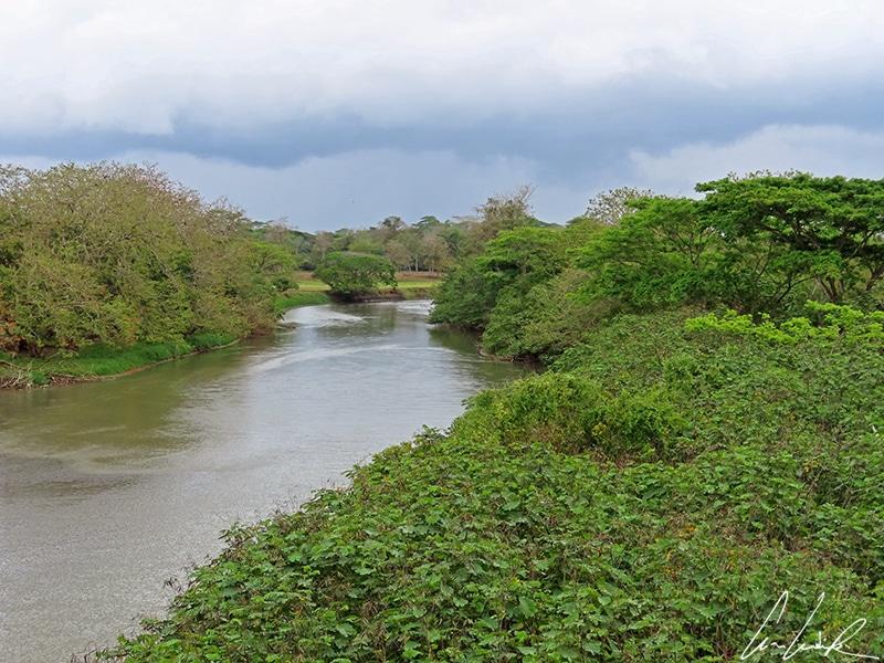 Situé en bordure de frontière avec le Nicaragua, la réserve de Caño Negro est traversée par le Rio Frio. C'est l'une des plus grandes réserves humides du Costa Rica.