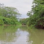 Dans la réserve de Caño Negro au Costa Rica, le Rio Frio est bordé par une végétation caractéristique des zones humides. La réserve est une zone humide qui abrite plus 300 variétés d'arbres.